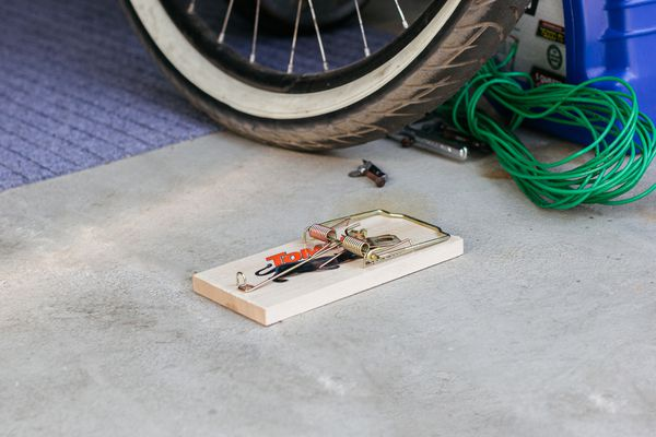 mouse trap in the garage