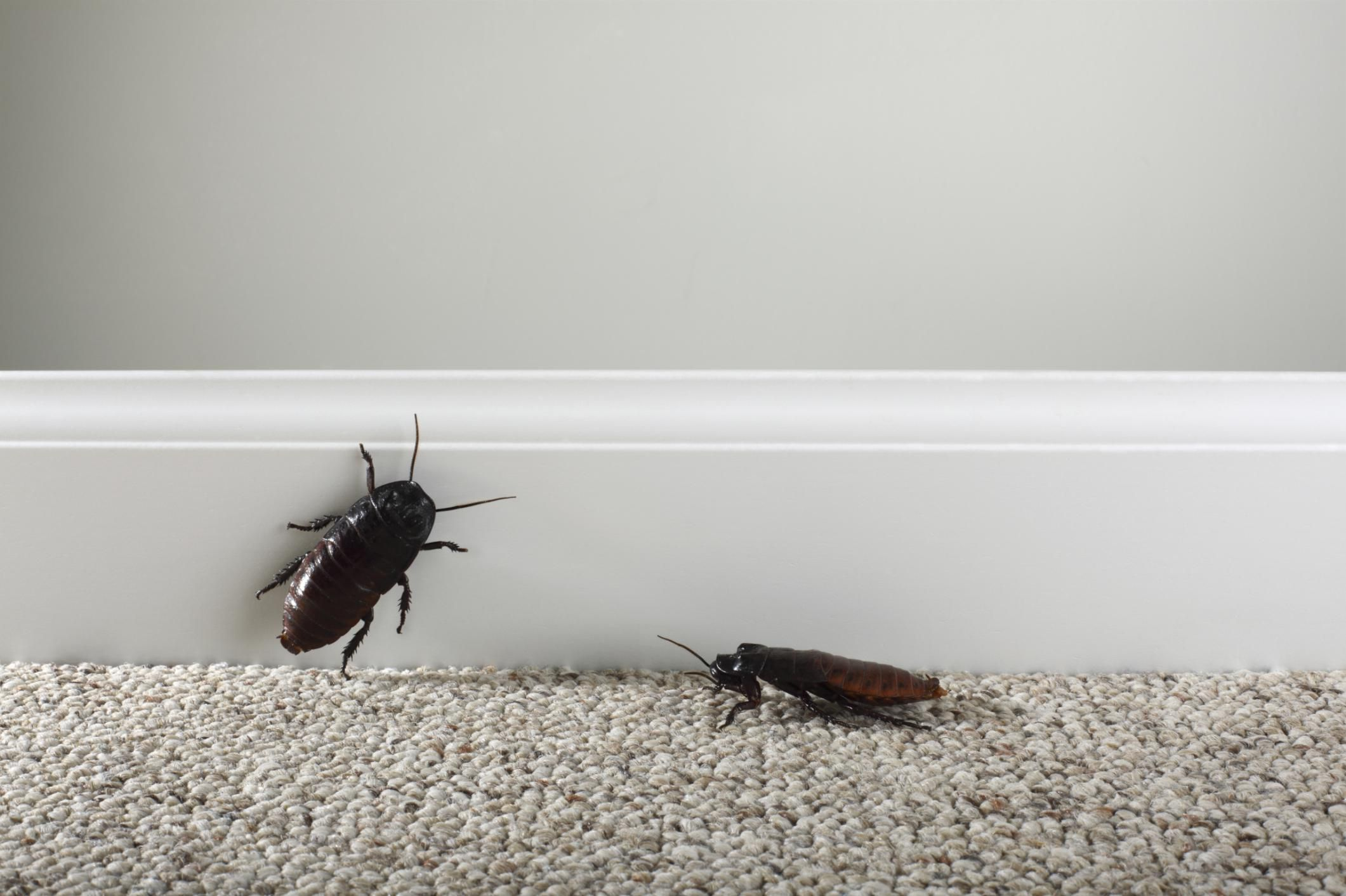 get rid of roaches naturally with homemade roach killer