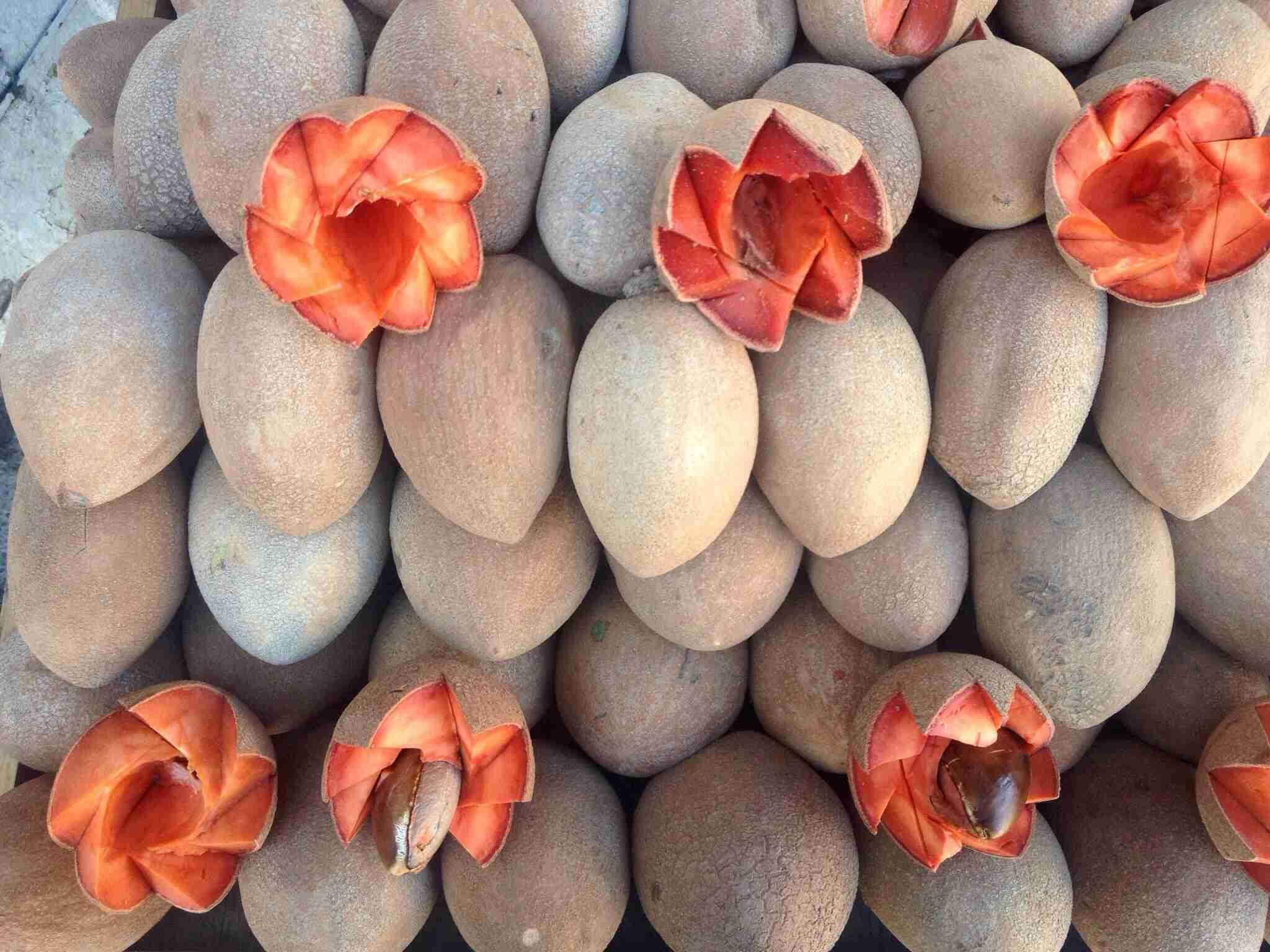 Mamey fruits