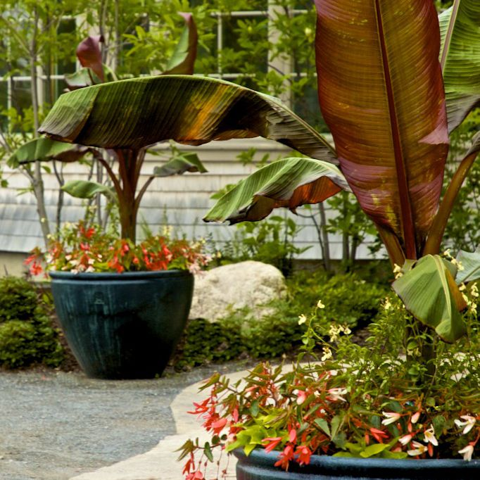 8 Stunning Container Gardening Ideas: Tips For Beautiful Large Container Gardens