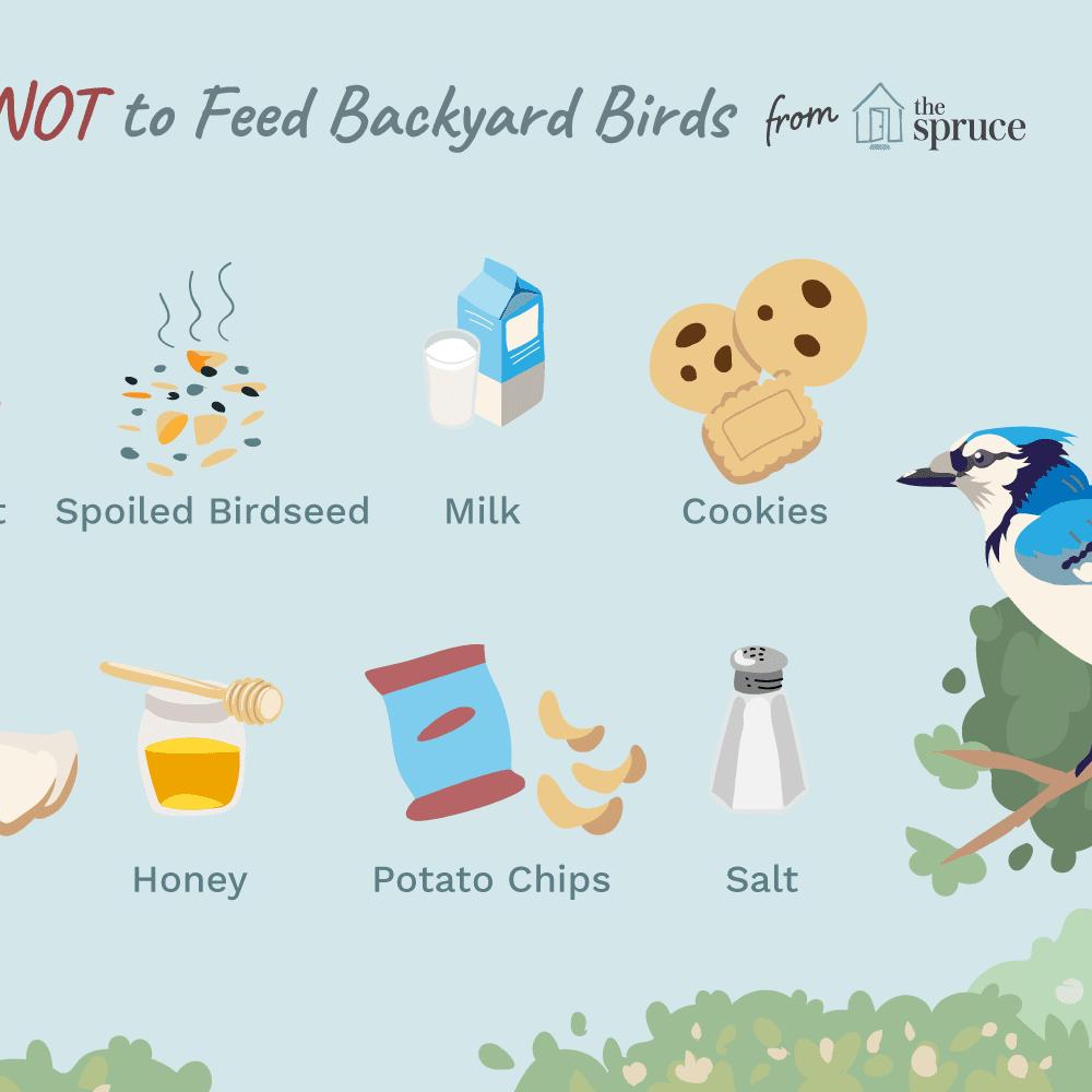 Top 10 Worst Foods To Feed Backyard Birds