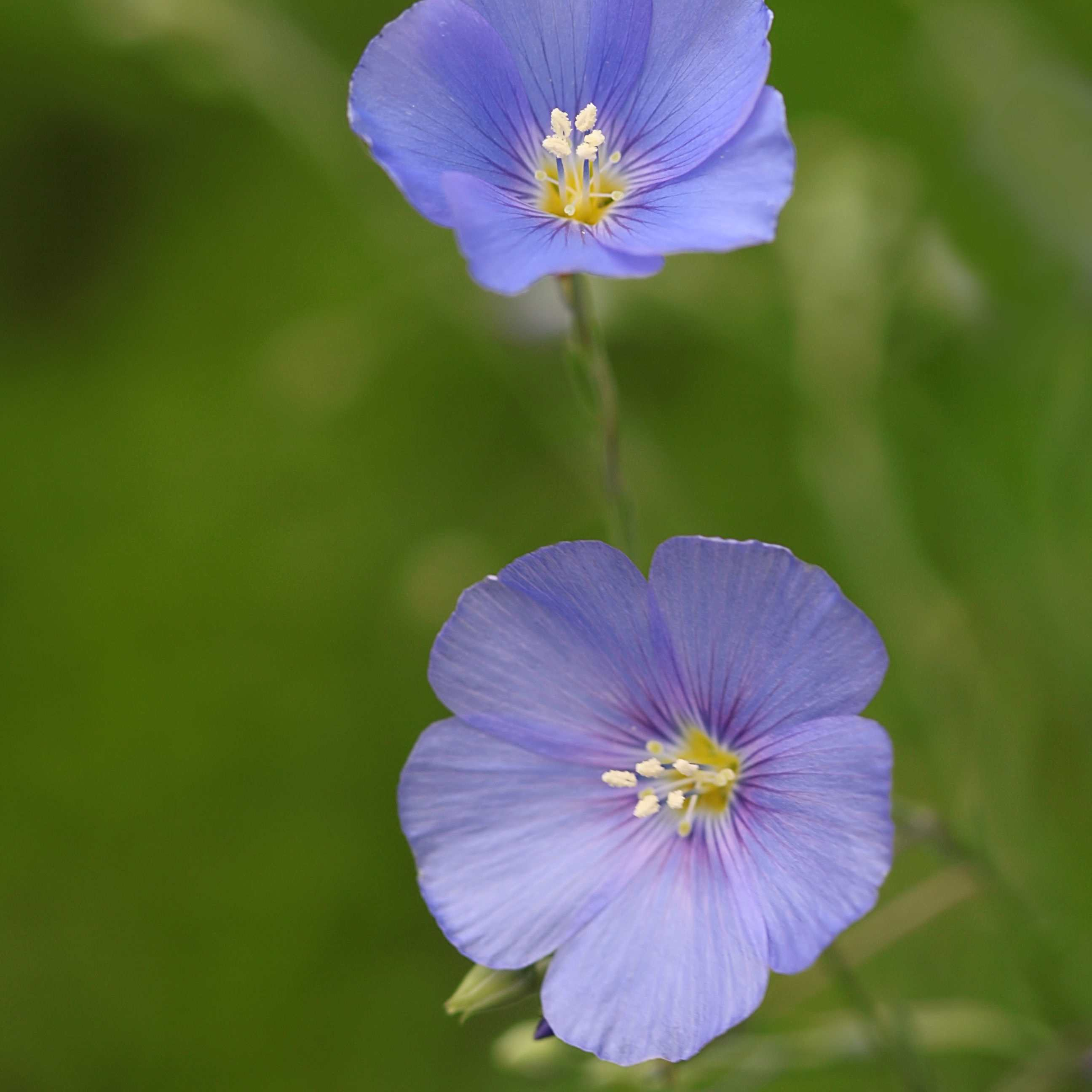 10 Easy Growing Wildflowers For Your Garden