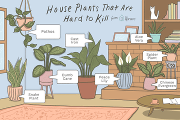 house plants that are hard to kill illustration