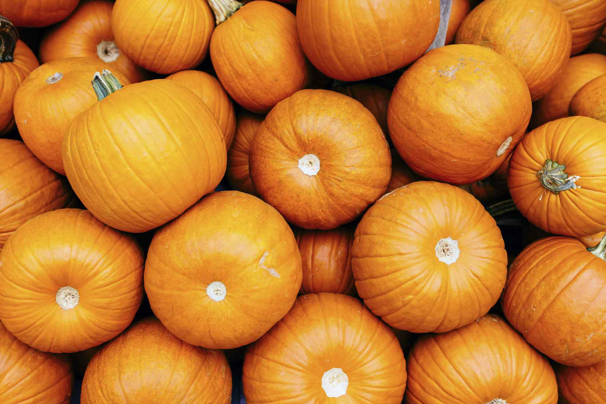 A full frame of pumpkins.