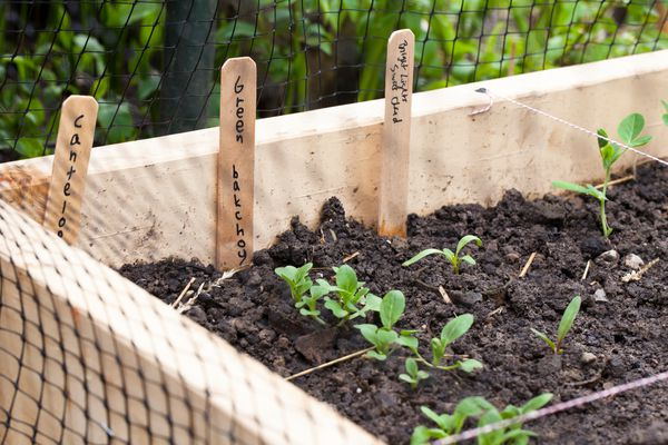 a raised gardening bed