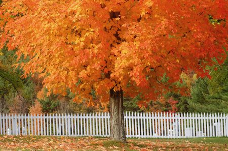 12 Trees With Brilliant Fall Color Plus Other Advantages