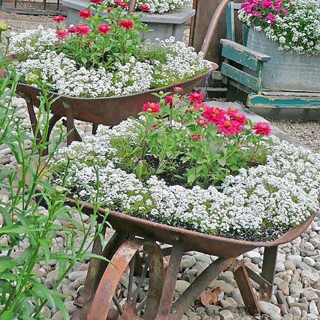 Old Wheelbarrows As Container Gardens Wheelbarrow Planters