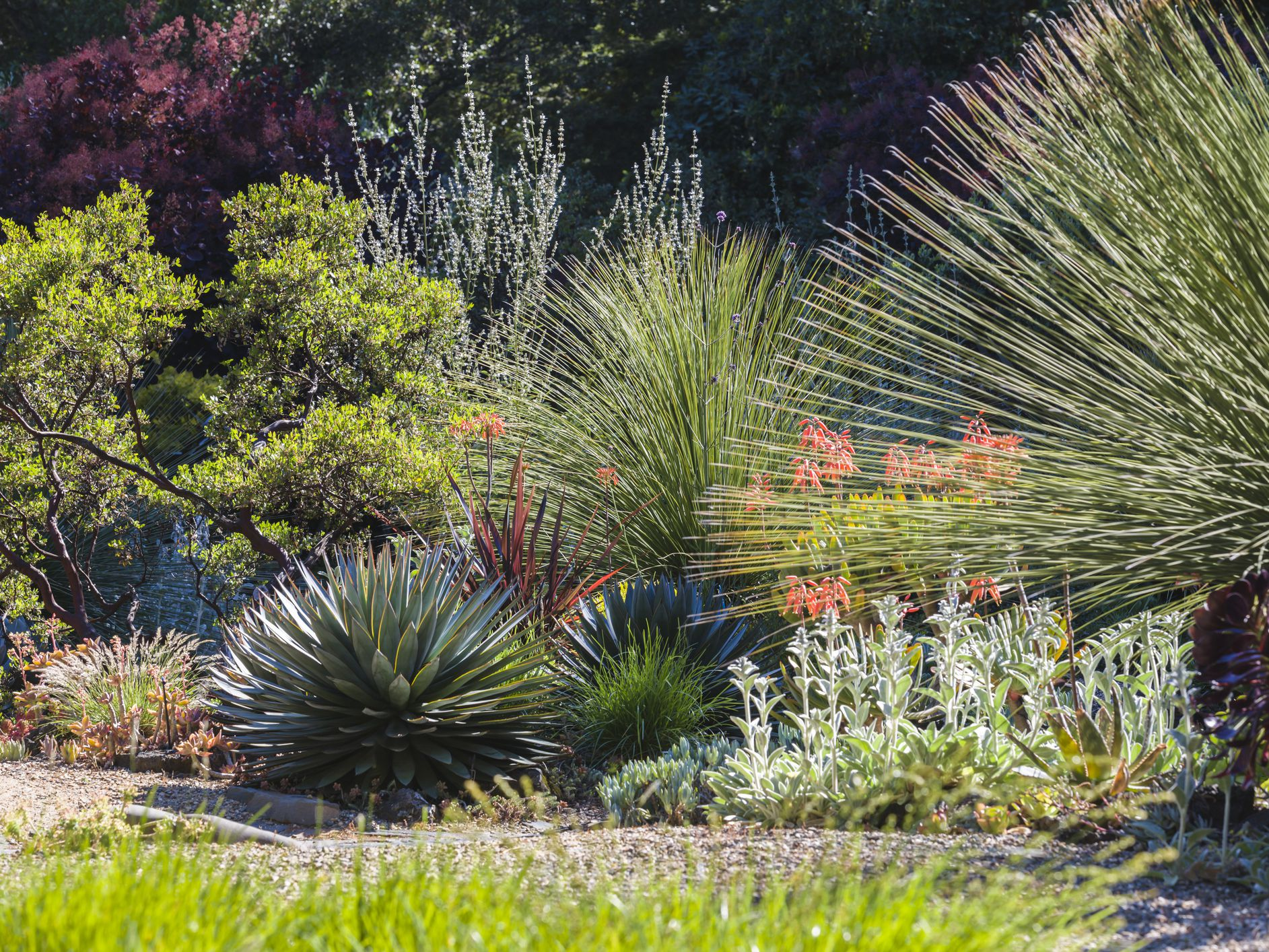 Drought Tolerant Plants For Landscaping