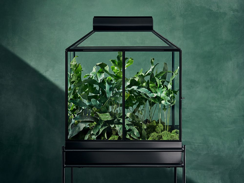 Black terrarium in the new Hilton Carter x Target collection