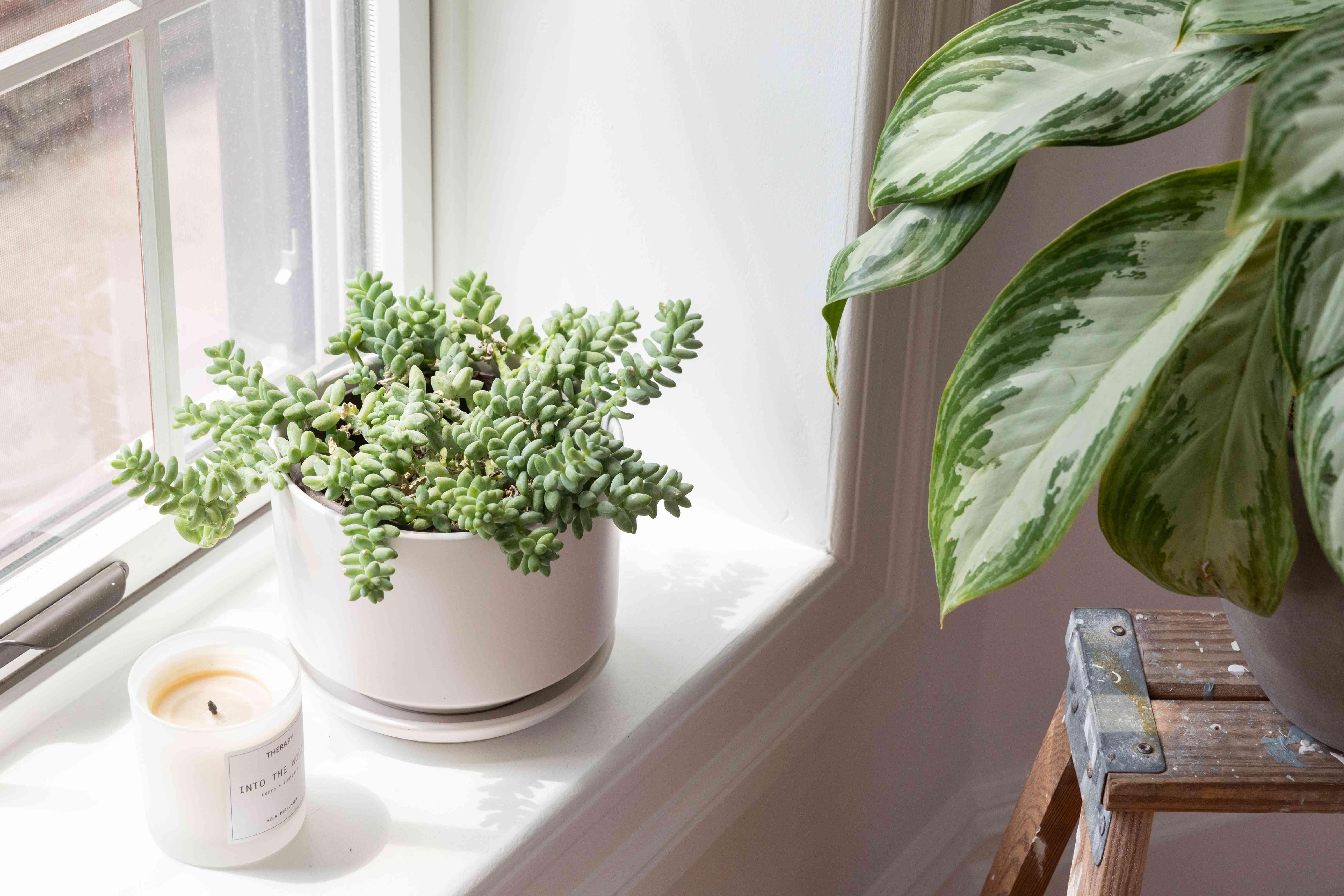 plant on a windowsill in bright direct light