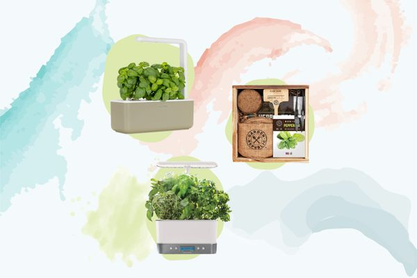 Best Herb Garden Kits
