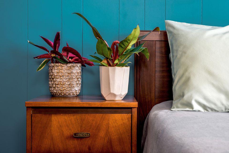 houseplants on a bedside table