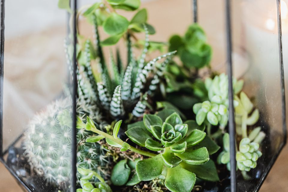 Glass terrarium filled with succulent varieties