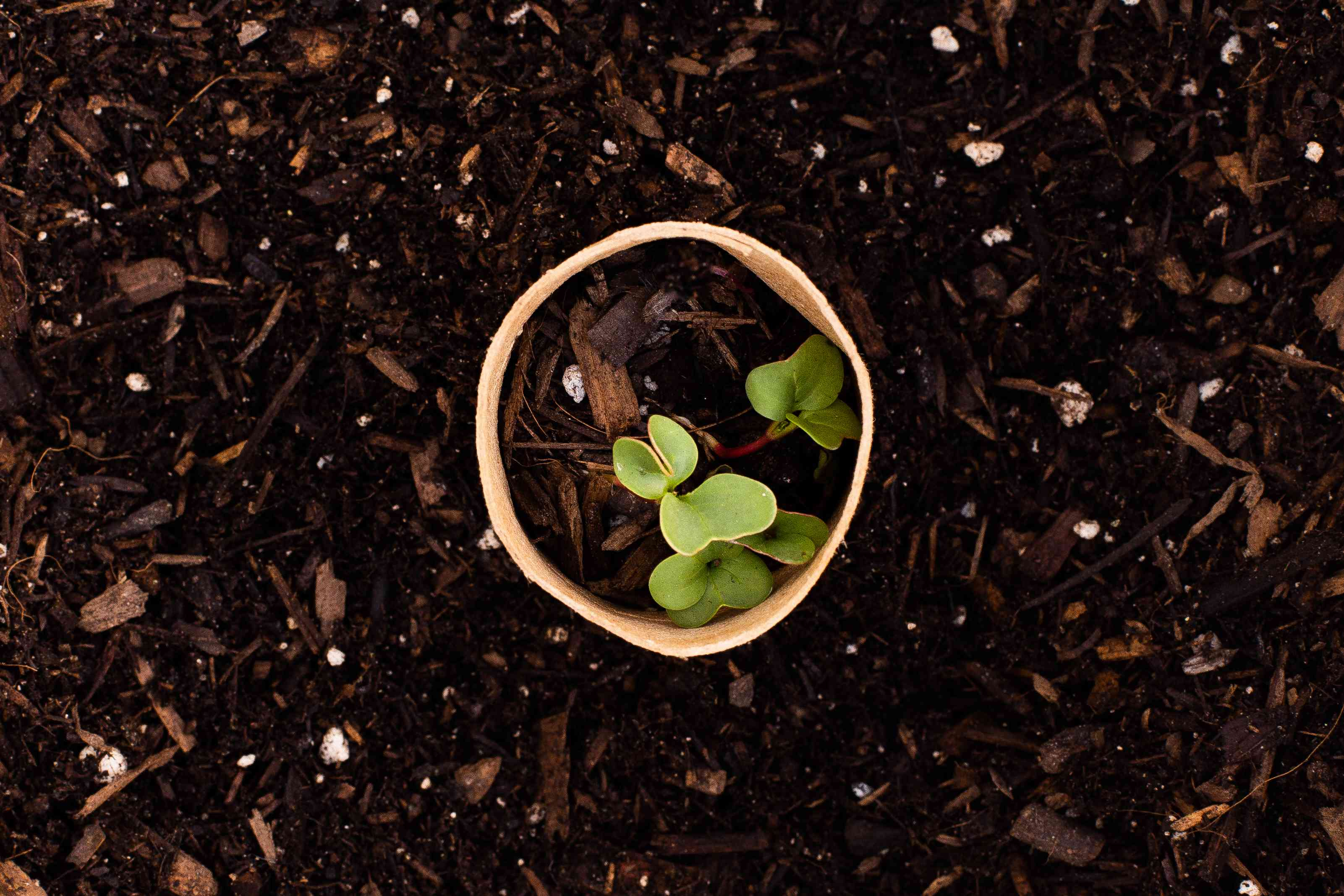 Toilet paper roll with plant sprout placed in ground closeup