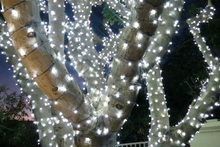 trees with lights - Outdoor Christmas Light Decorators