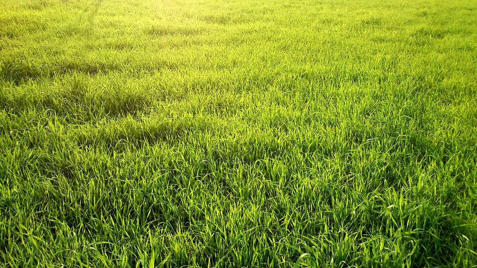 A green lawn