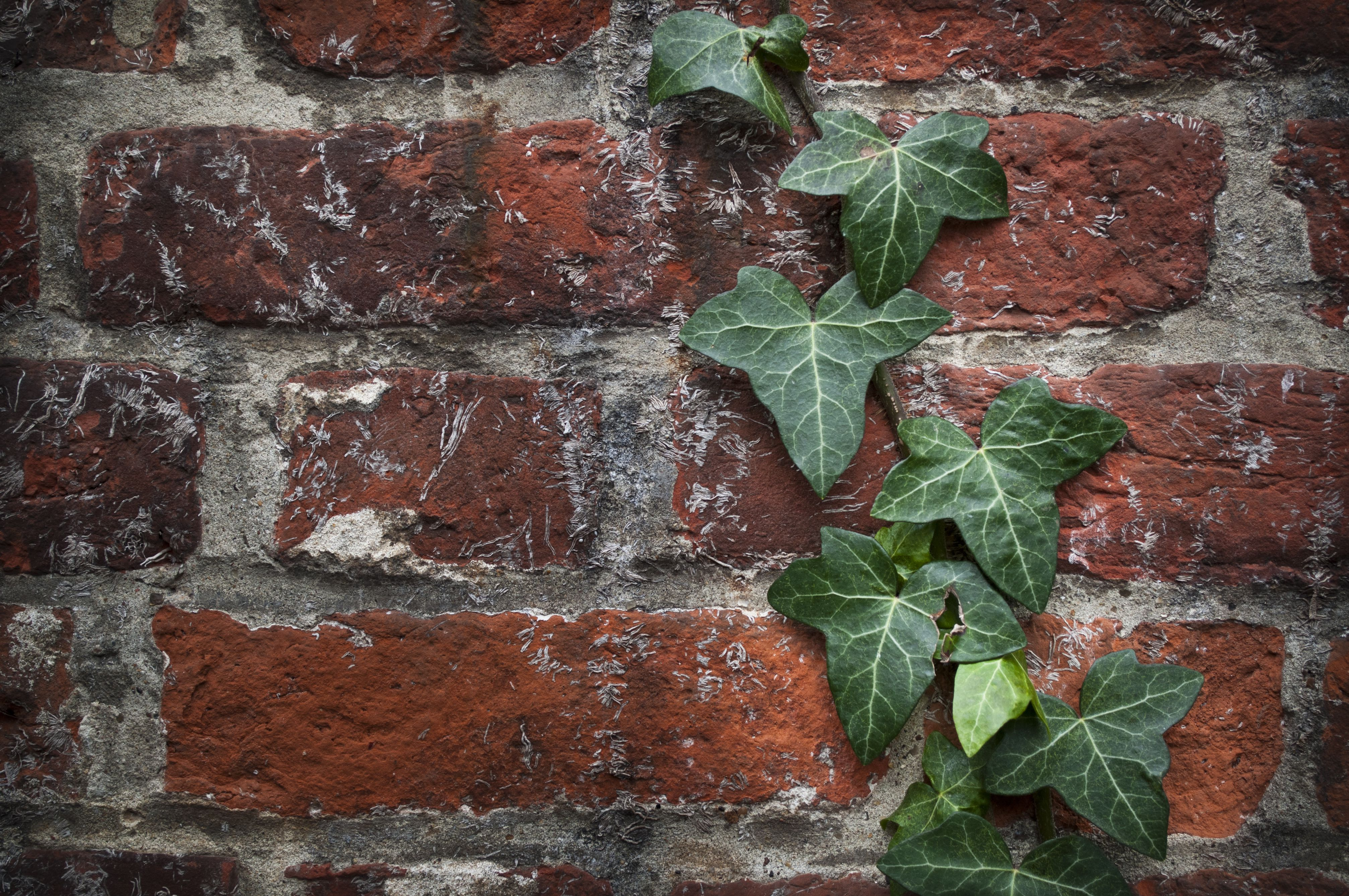 How to Kill Ivy and Why You Might Need To