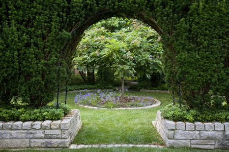 How To Grow And Care For Yew Bushes