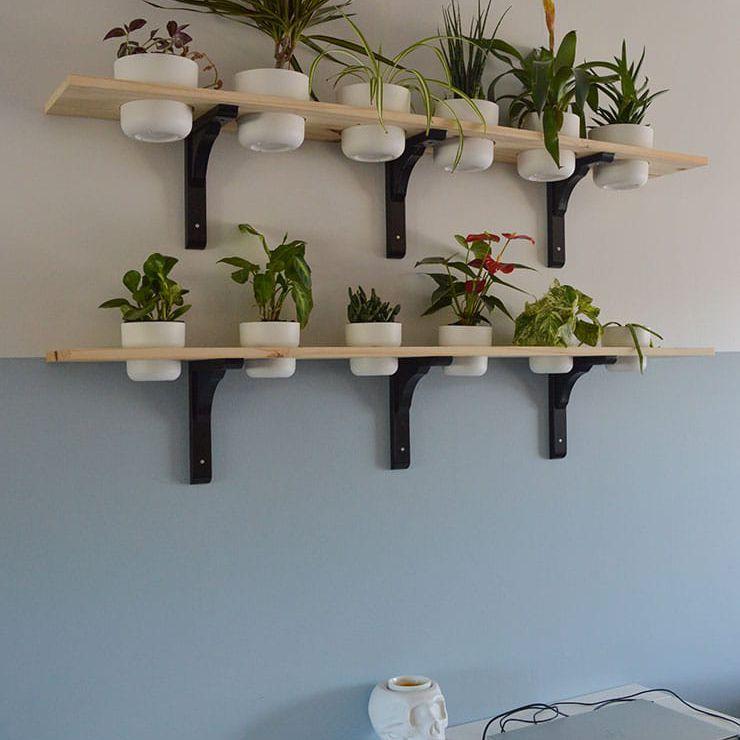 Nicole Schmitz plant shelf