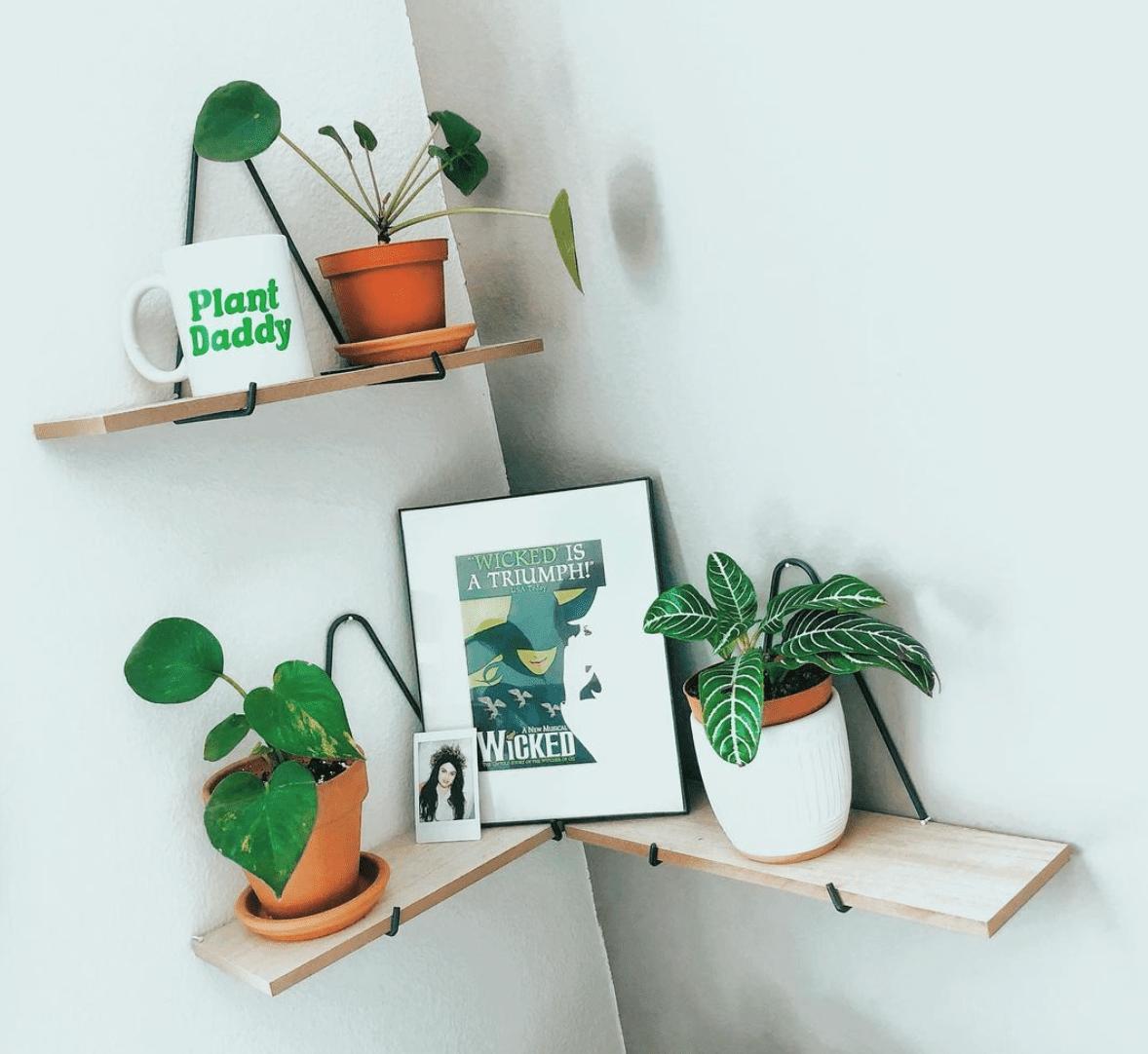 Cisco de Luca plant shelf