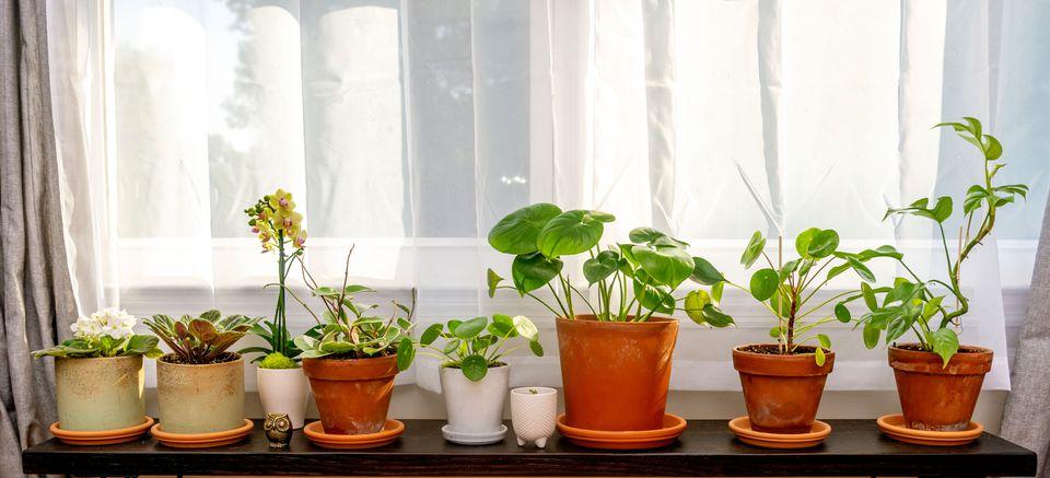some of Debbie Wolfe's houseplants