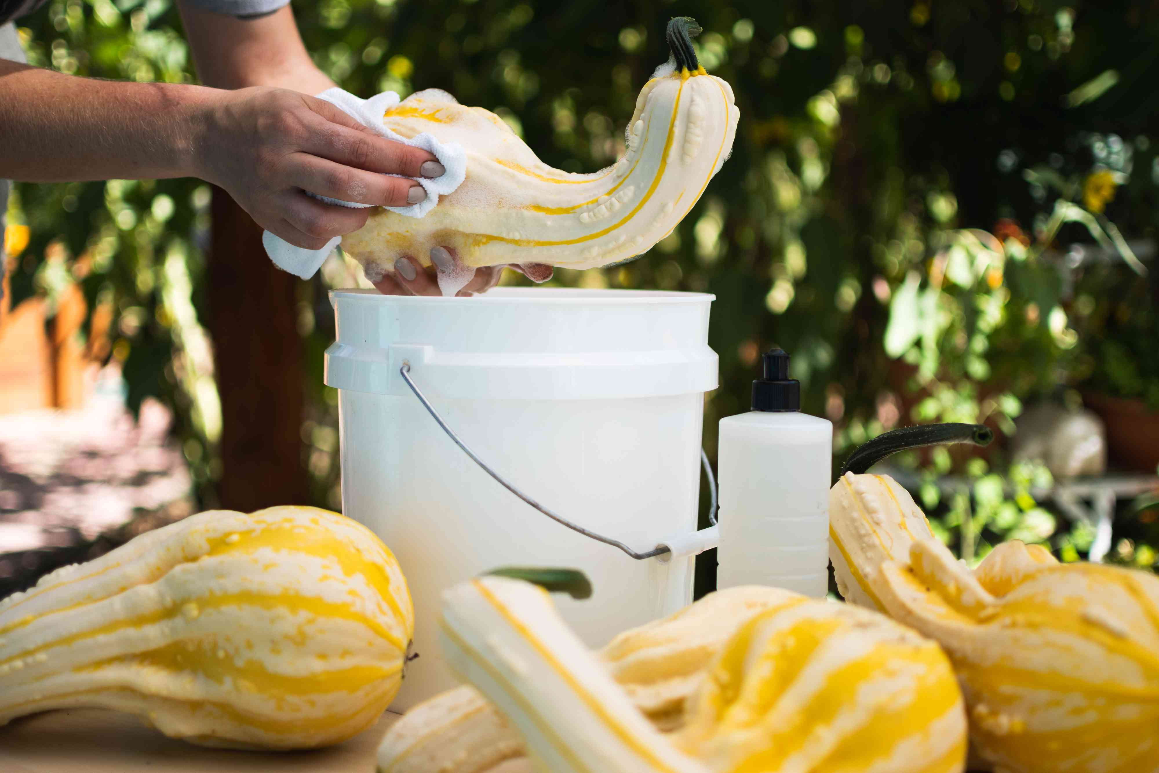 White and yellow gourd being washed in white bucket of soapy water