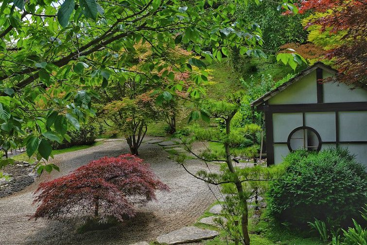 Japanese maple tree on gravel path by small studio building in forest setting