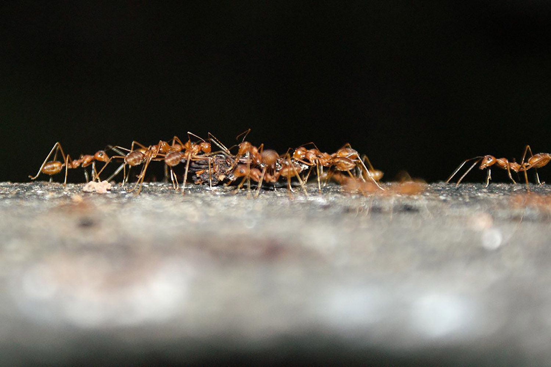 Using Liquid Ant Bait To Control Ants