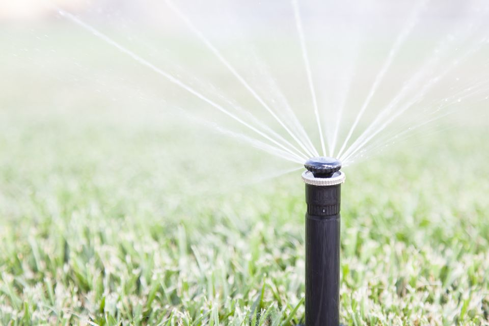 In-ground sprinkler activated and watering the grass.