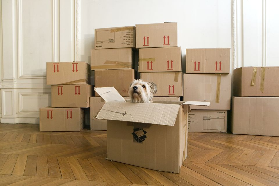 Dog in a cardboard box in an empty house