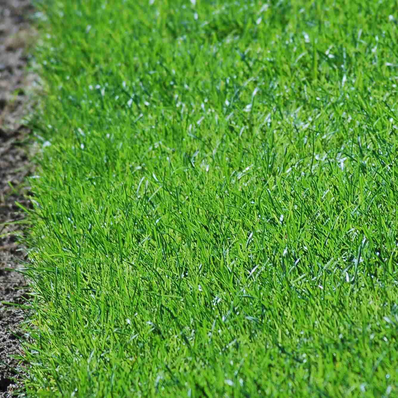 Don't scalp your lawn if you want to have healthy grass (image).