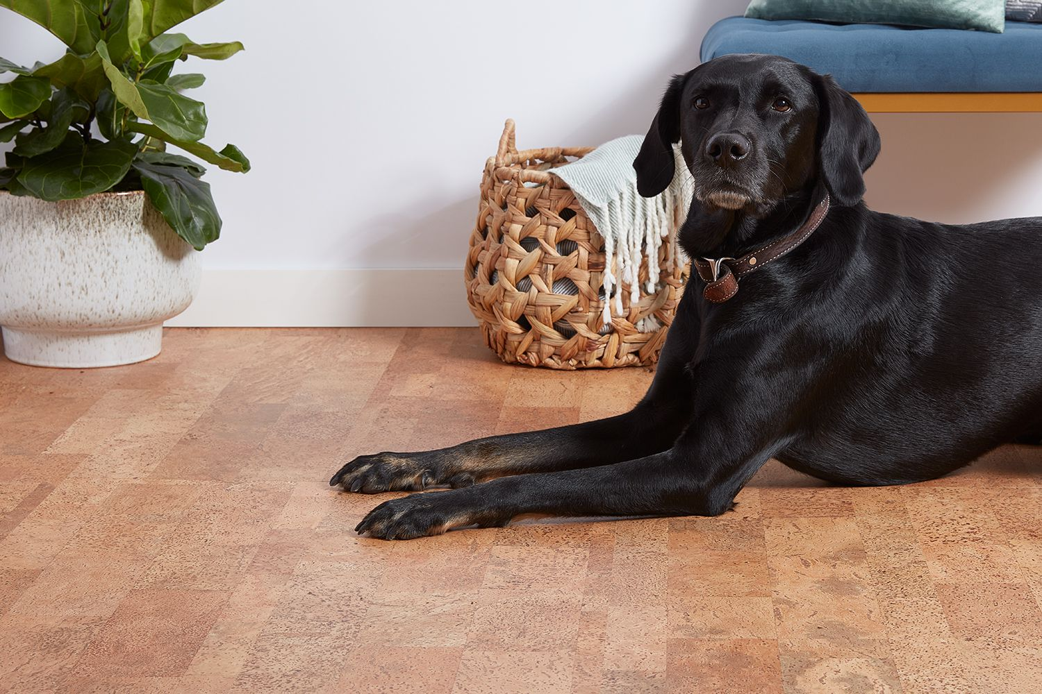Best Wood Flooring Options For Homes With Dogs