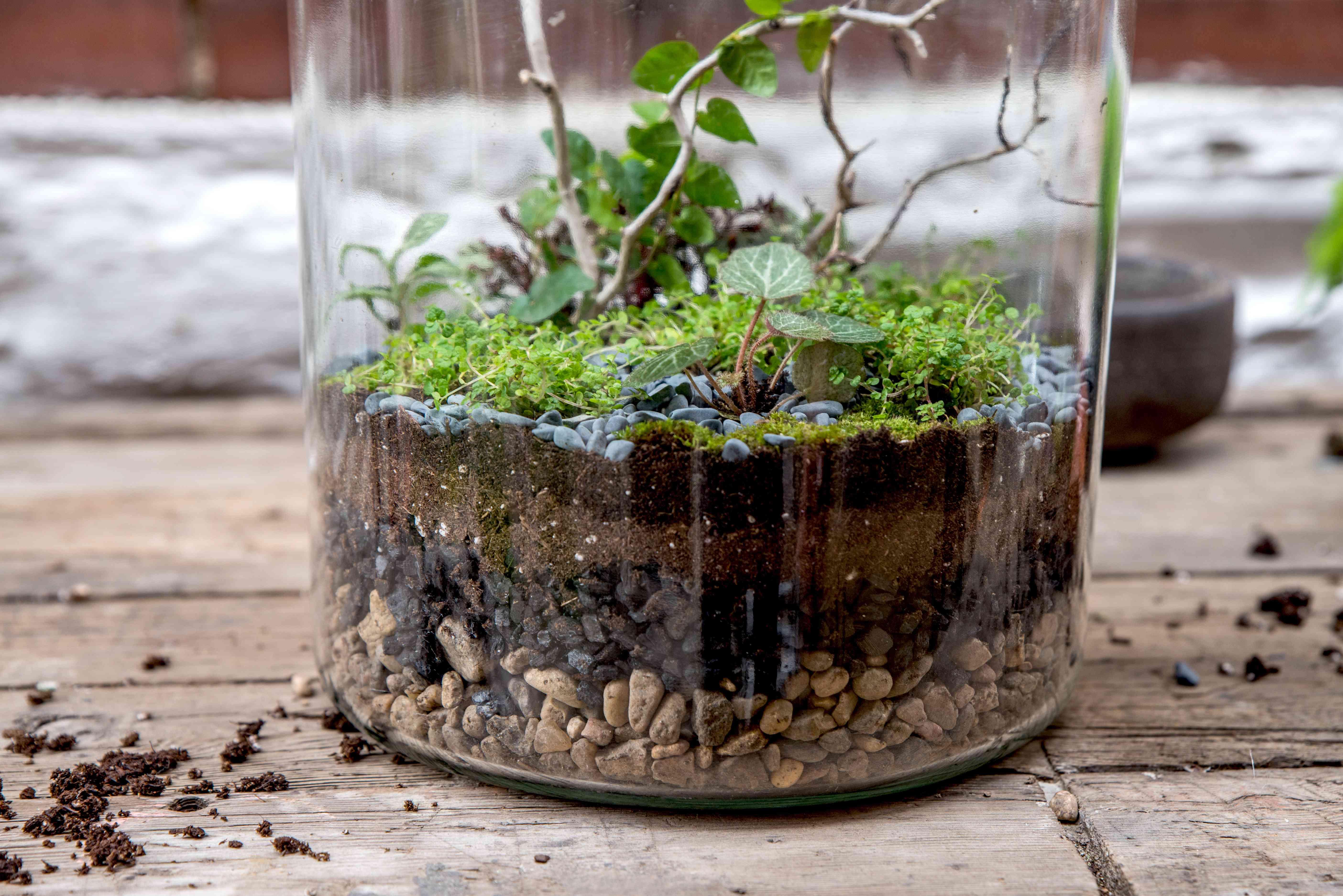 maintaining the terrarium