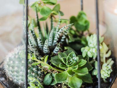 Glass terrarium filled with succulent varieties