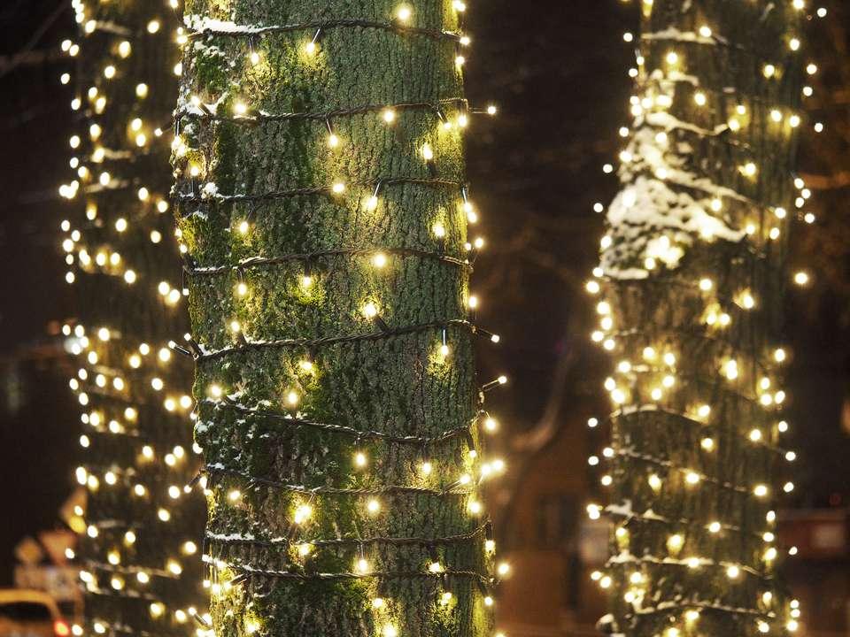 Trees with christmas lights