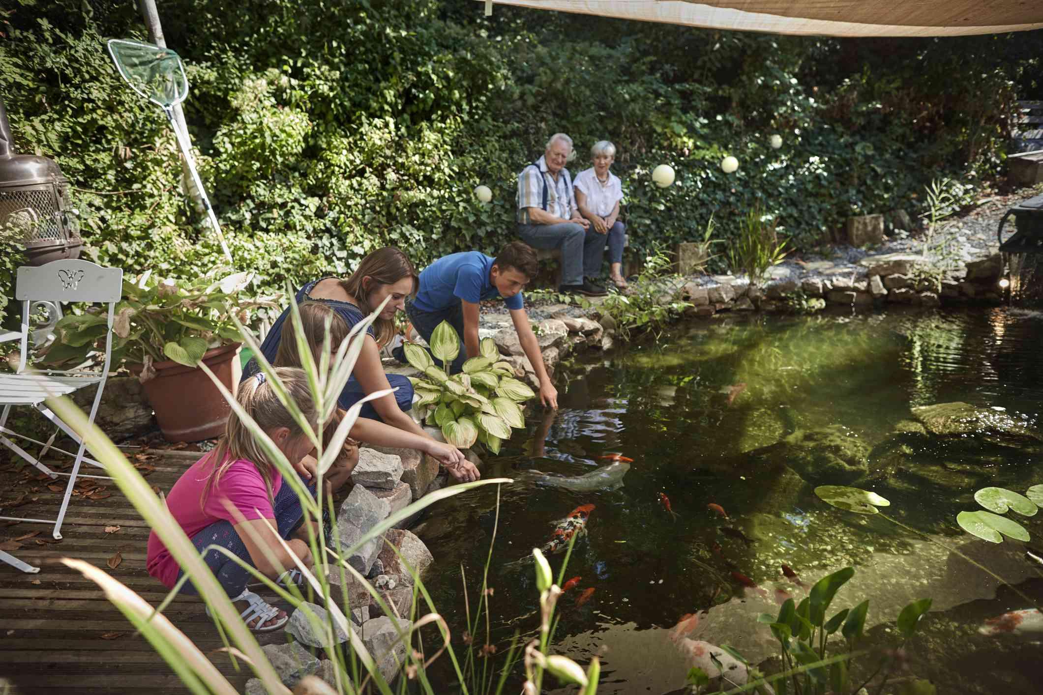 A family feeding and watching koi fish.