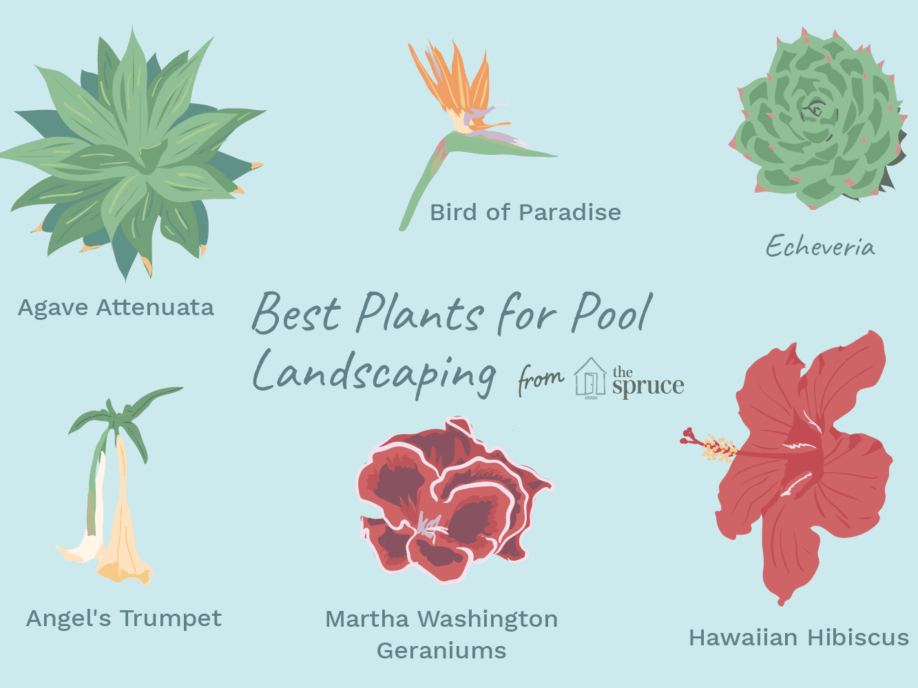The Best Plants for Poolside Gardens