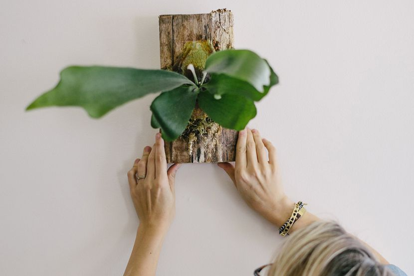 woman hanging a staghorn fern