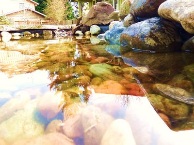 10 Garden Pond Building Tips