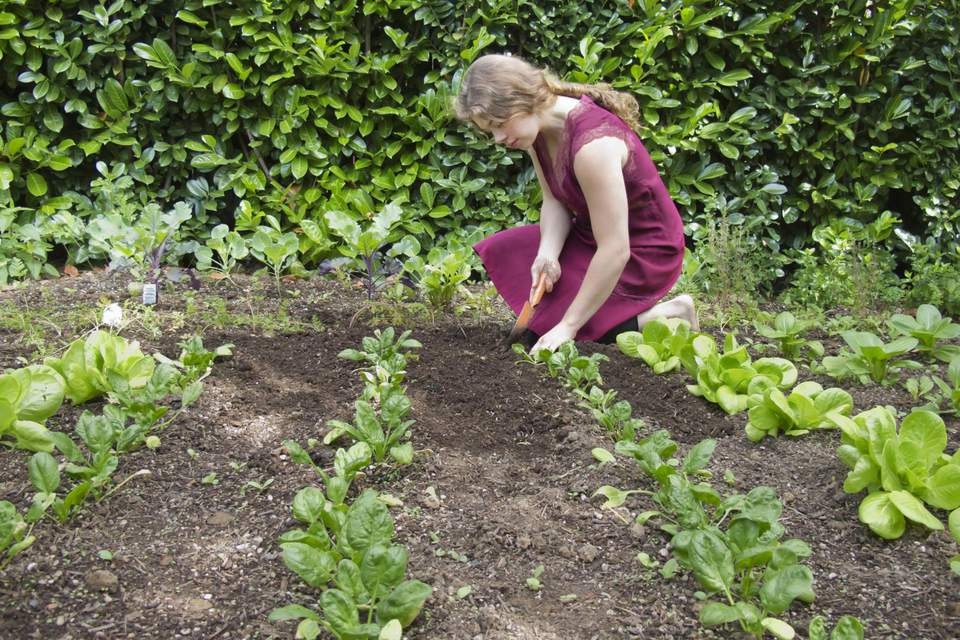 Young women weeds vegetable garden