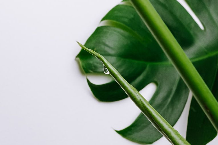 water droplet coming off of a plant