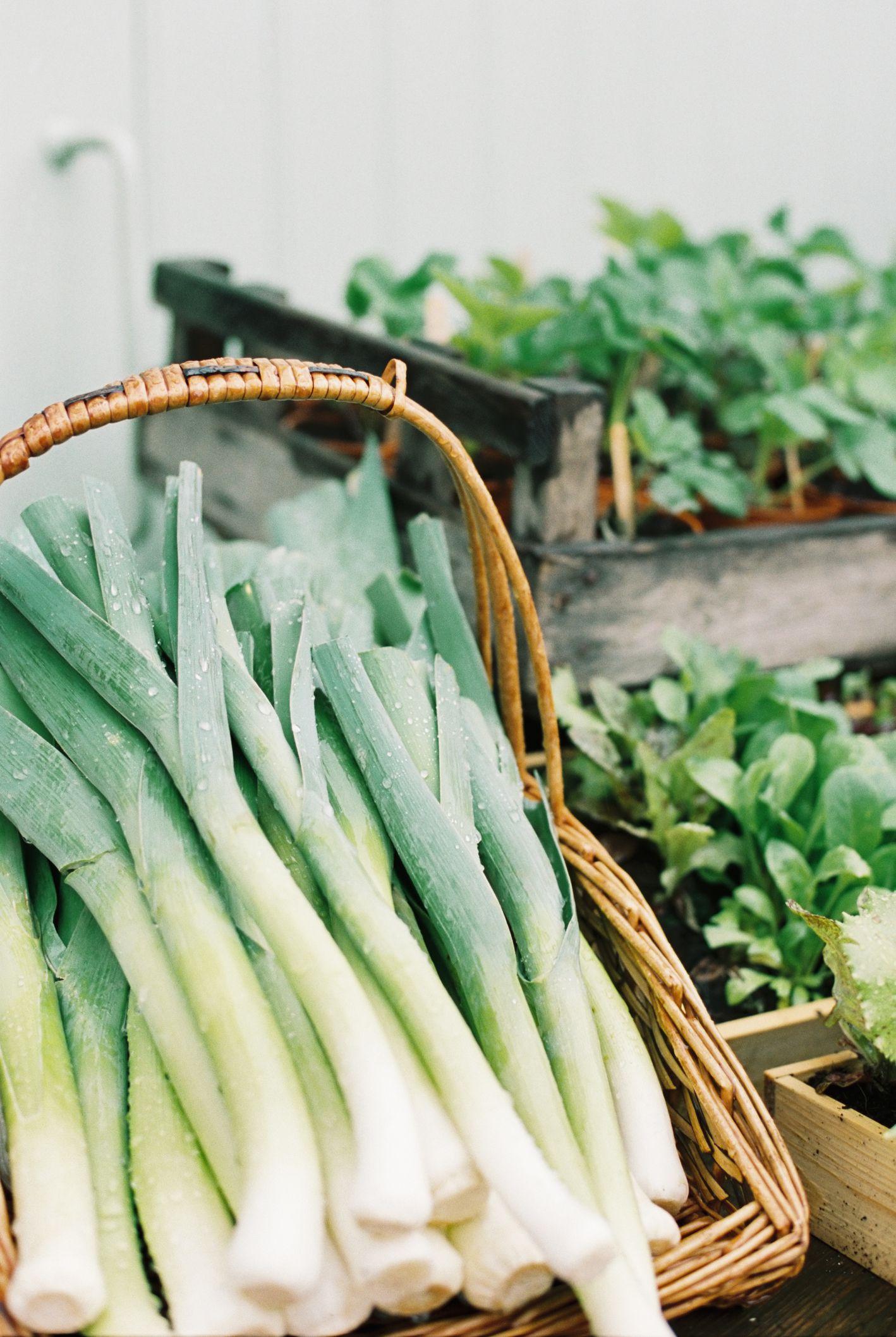 Growing Leeks In The Vegetable Garden