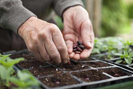 Vegetable Garden From Seeds Or Seedlings