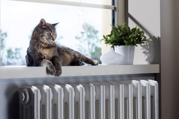 Cat laying near radiator
