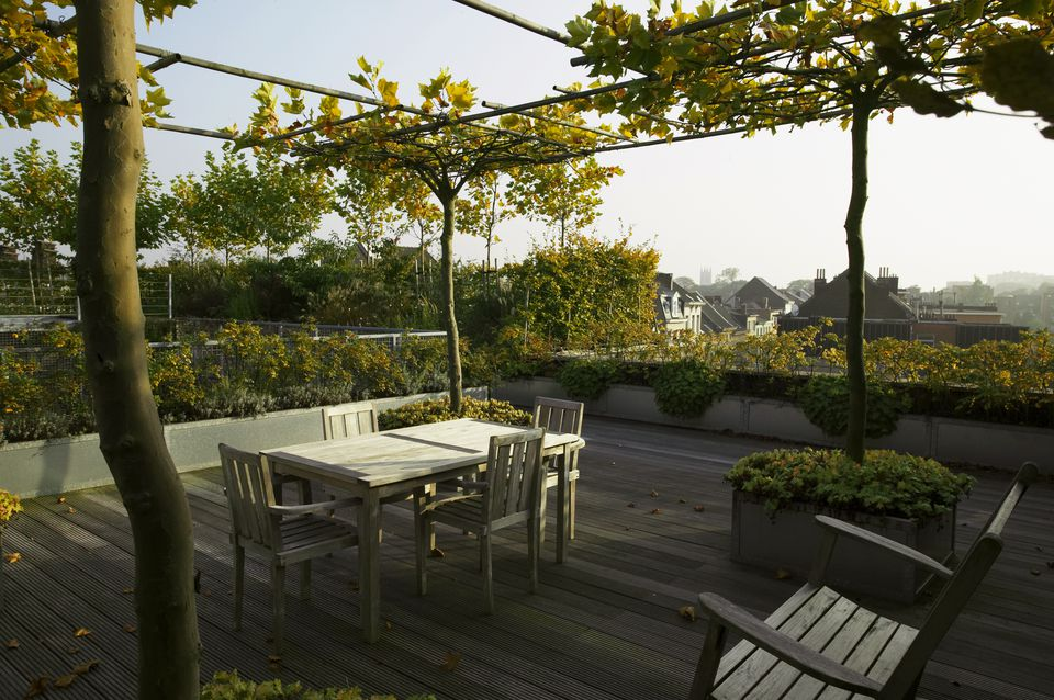 Large roof terrace with horizontally trained plane trees (Platanus) and wooden dining furniture, October. Part of a series, image 4 of 21