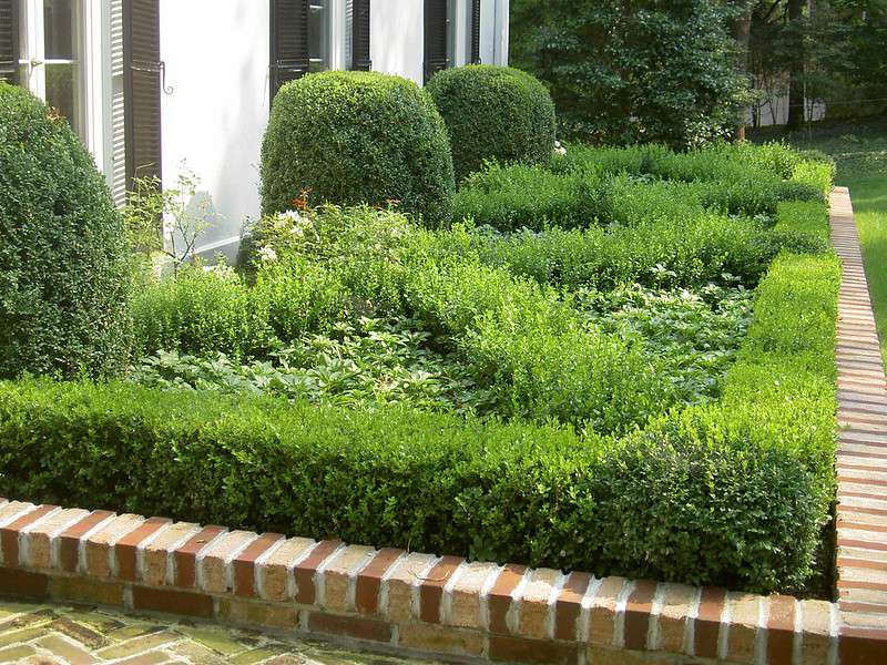 Low growing boxwoods planted above a low brick wall