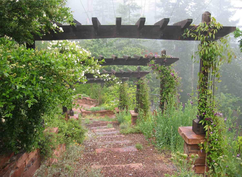 Vertical garden growing on trellis.