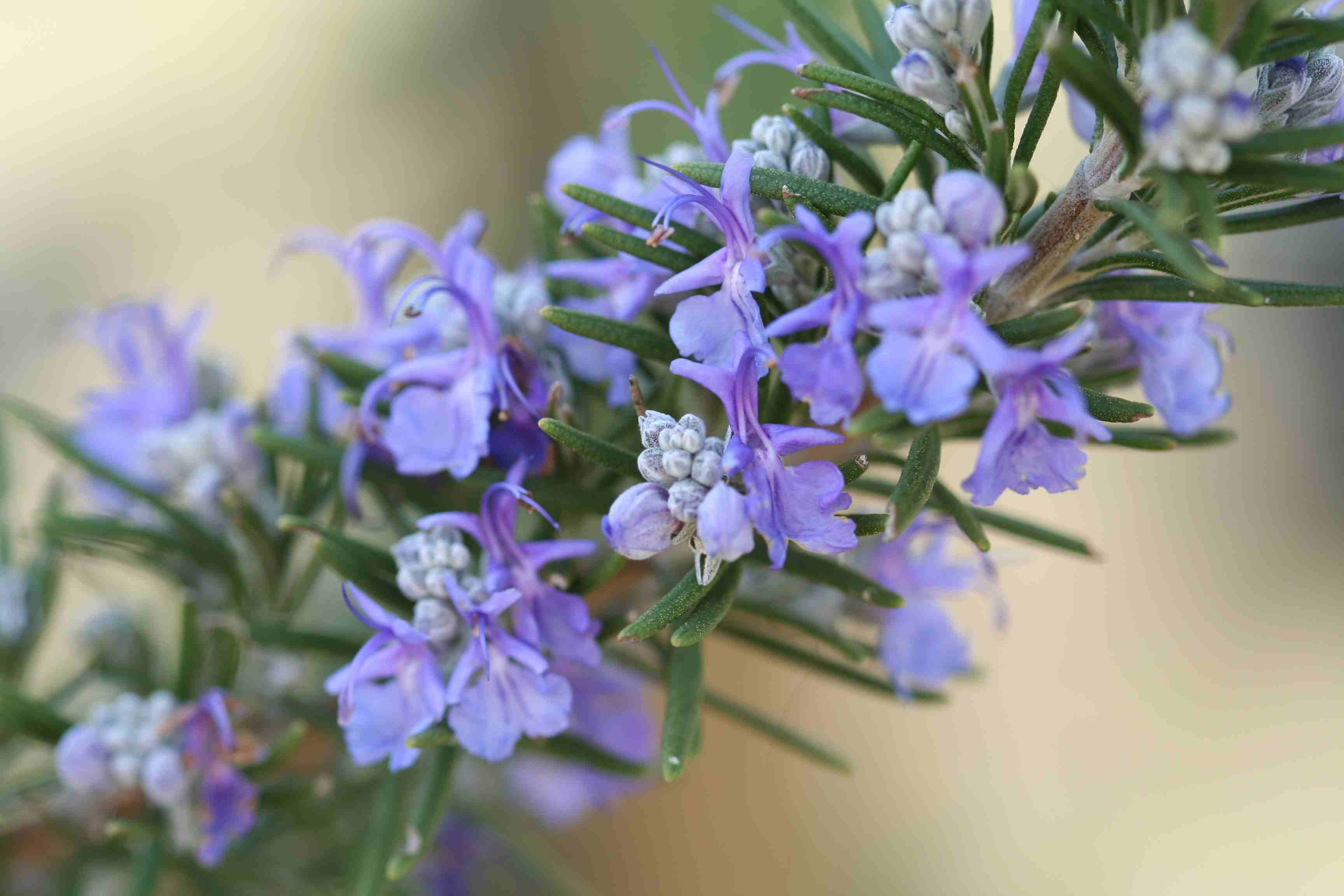 The Best Plants To Attract Bees