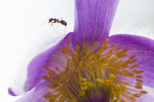 Close up of an ant on a flower