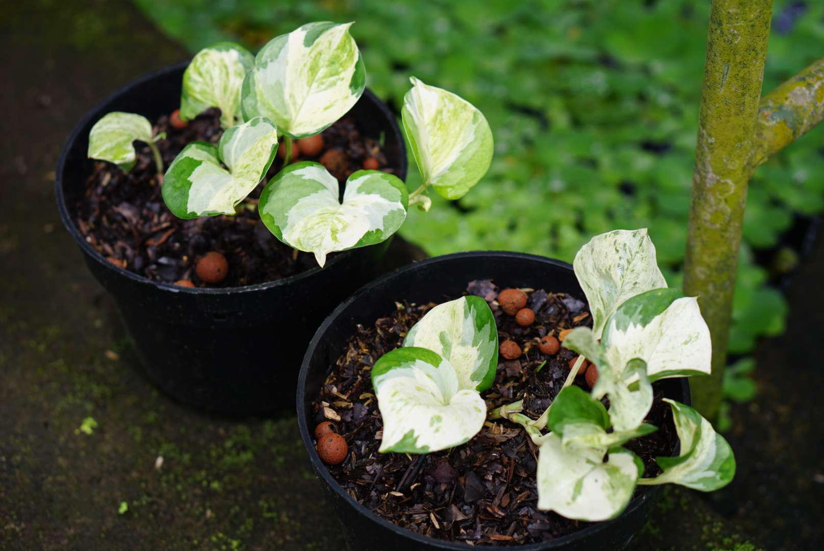 potting soil in plants